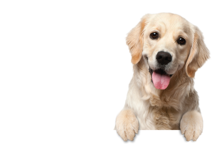 Dog Delights Background